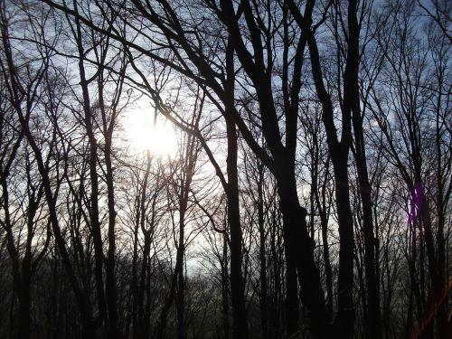 forest light morgenstimmung