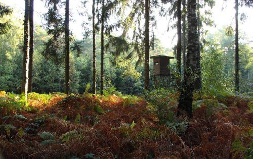 miškas,medžiai,ruduo,rudens miškas,gamta,spygliuočių miškas,papartis,ešeriai,laistymas