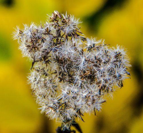 forest autumn spor plant