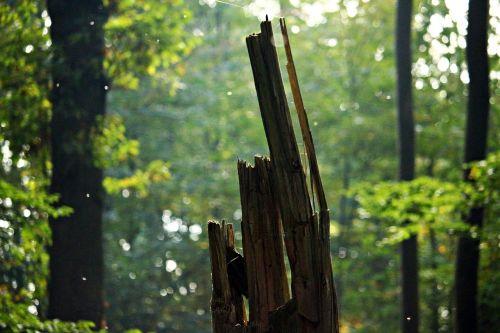forest tree stump autumn