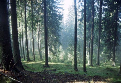 forest autumn autumn forest