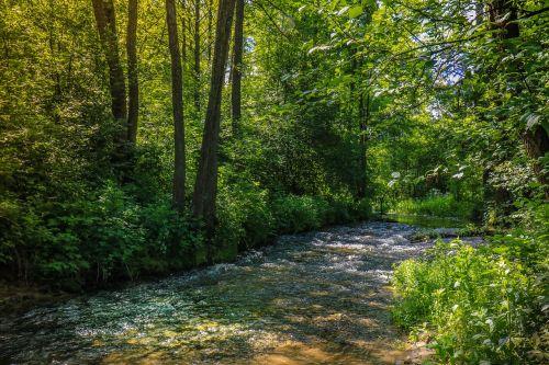 forest stream torrent