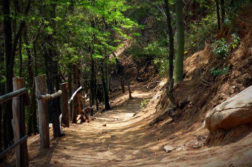 miškas,medžiai,takas,kelias,gamta,kraštovaizdis,purvo kelias,lauke,augmenija,augalai,kaimo kelias