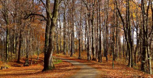 forest autumn autumn gold