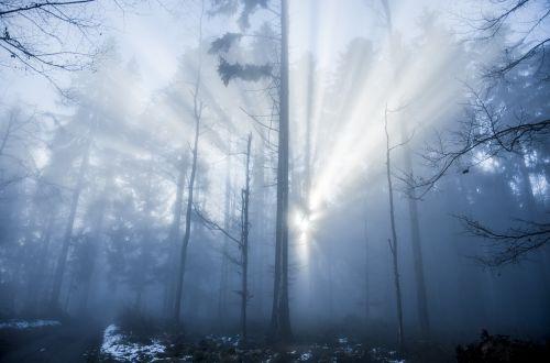 forest light light beam