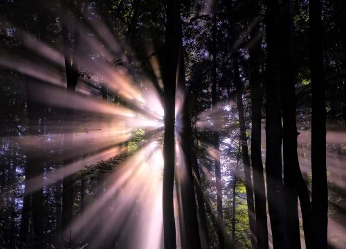 forest sunlight sun beams