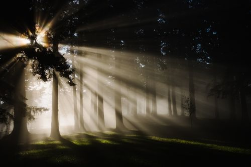 forest nature sunbeams