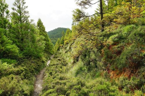 forest green azores