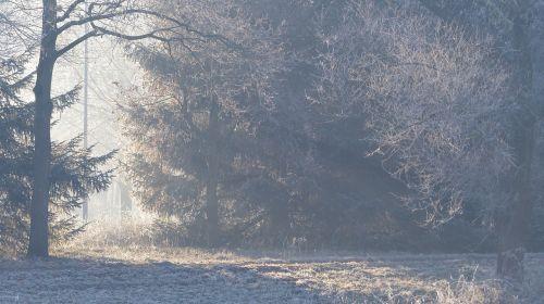 miškas,šaltis,rūkas,ankstus rytas,ruduo,kritimas,sezonas,gamta