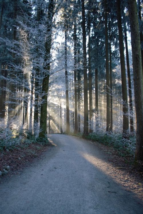 forest sunrays pathway