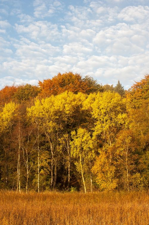 forest trees autumn