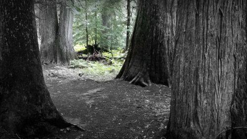 forest dark forest woodland