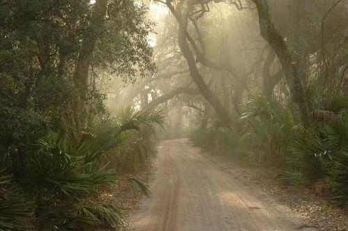 forest path foggy