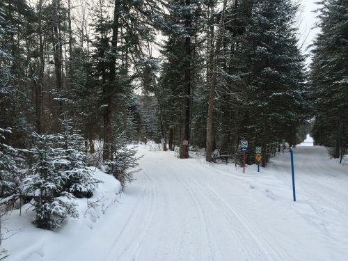 forest,snow,winter landscape,canada,december