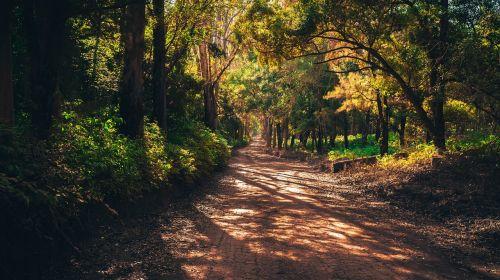 forest mato road