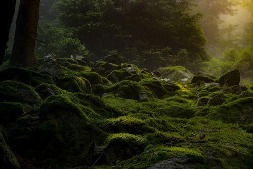 forest dark moss