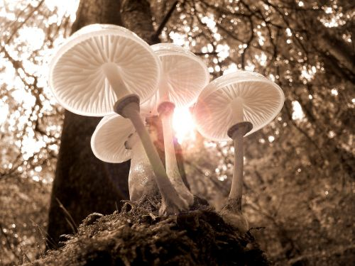forest mushrooms nature
