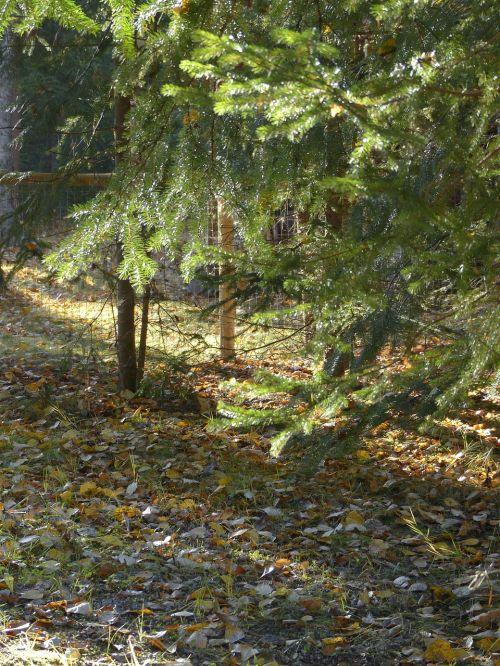 forest sun flooded backlight