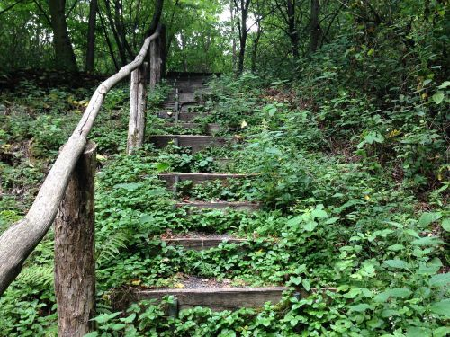forest stairs forest staircase