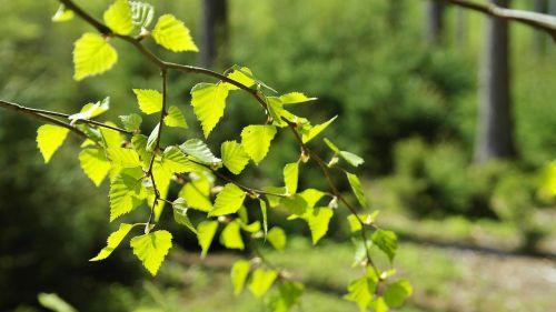 miškas,medžiai,gamta,pavasaris,šviesa,šešėlis,žalias,aplinka,kraštovaizdis,augalas,lapai,ekologija,gamtos apsauga,aplinkos apsauga,biologija,eco,žemė,ekologiškas,atmosfera,gyventi,medžių apsauga,ekologinė pusiausvyra,Waldsterbenas,apsauga,atsakomybė
