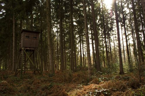 forest hunter hut