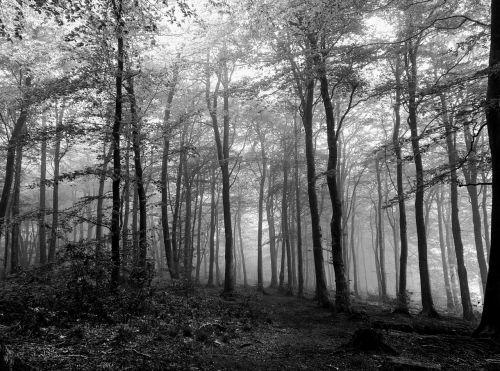 forest black white