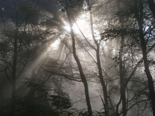 forest light lighting