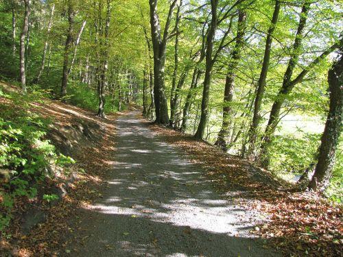 miškas,toli,gamta,miško takas,medžiai,takas,ruduo,žygiai,saulėtas,Promenada,žalias,gamtos takas