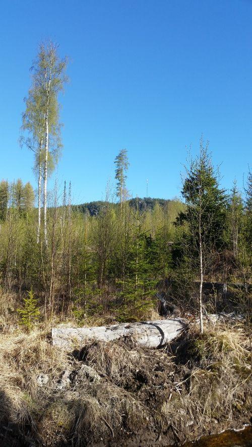 forest himmel nature
