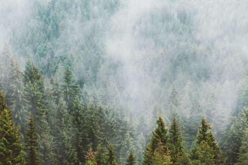forest fog mood