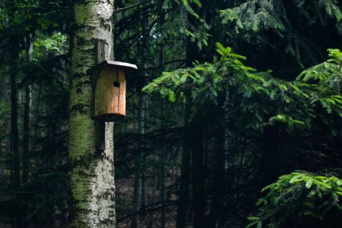 forest booth birds