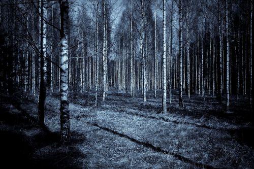 forest night dark