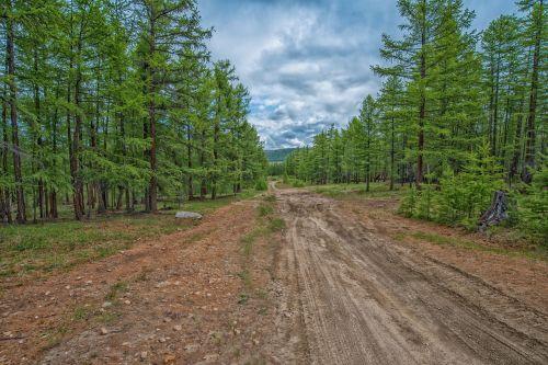 forest tiger national highway