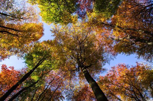 forest autumn sky
