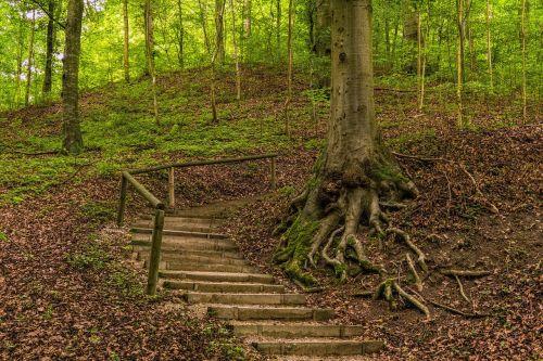 miškas,toli,gamta,miško takas,žygiai,medžiai,takas,kraštovaizdis,žalias,poilsis,kelias,žinoma,šakninis kelias,gamtos takas,idiliškas,vaikščioti,Promenada,tylus,romantiškas,vasara,atsipalaiduoti,idilija,nuotaika,gražus,taikus,atsipalaidavimas,gamtos rezervatas,atsigavimas,susigrąžinti,šaknis,senas