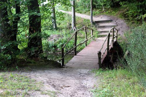 forest way landscape