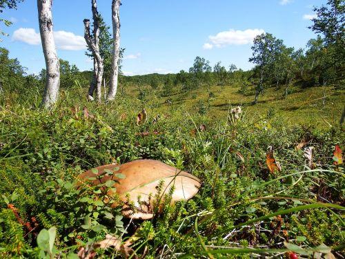 forest field tundra