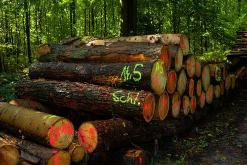 forest wood pile strains