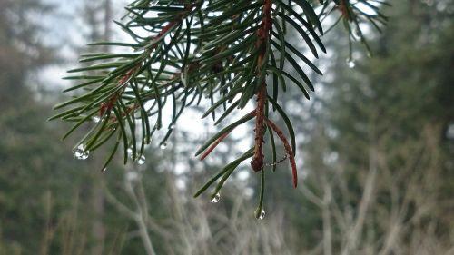 forest moisture drops