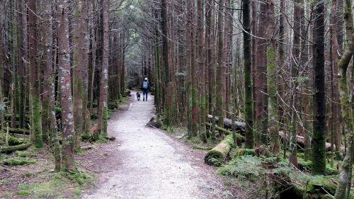 forest trail walking