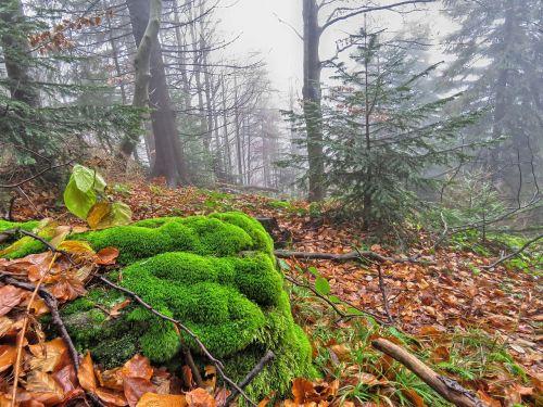forest autumn foliage