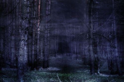 forest fog mystical