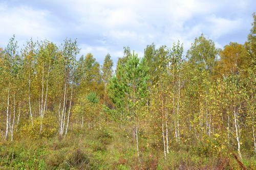 forest autumn autumn nature