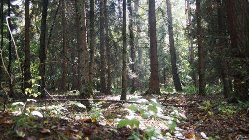forest light mood