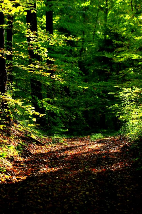 forest autumn forest path