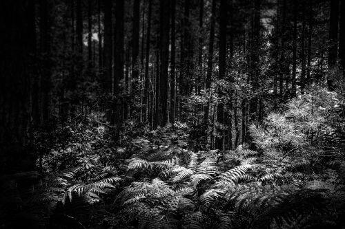 forest darkness night