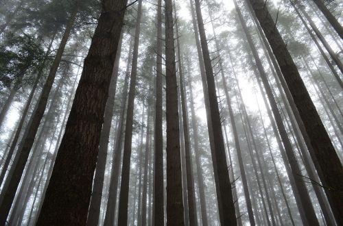 forest mist fog