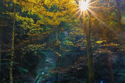 forest autumn tree stump