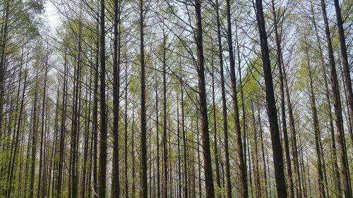 forest meta-access ecuador find wood