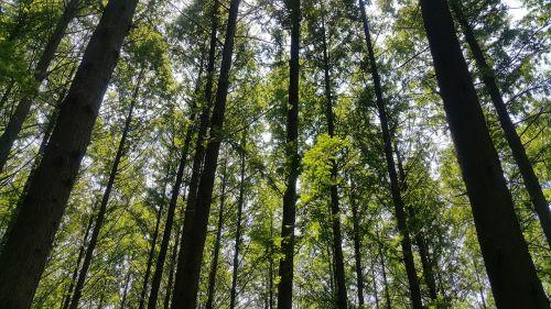 forest meta esquire wood
